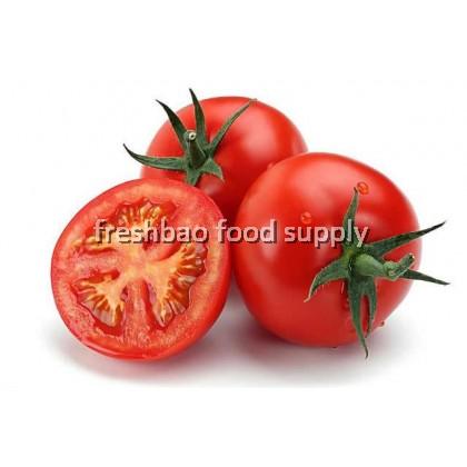 番茄 Tomato 400gm+-